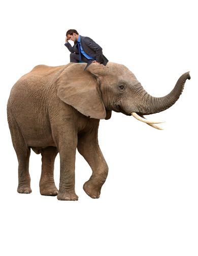 ElephantRiderwrong